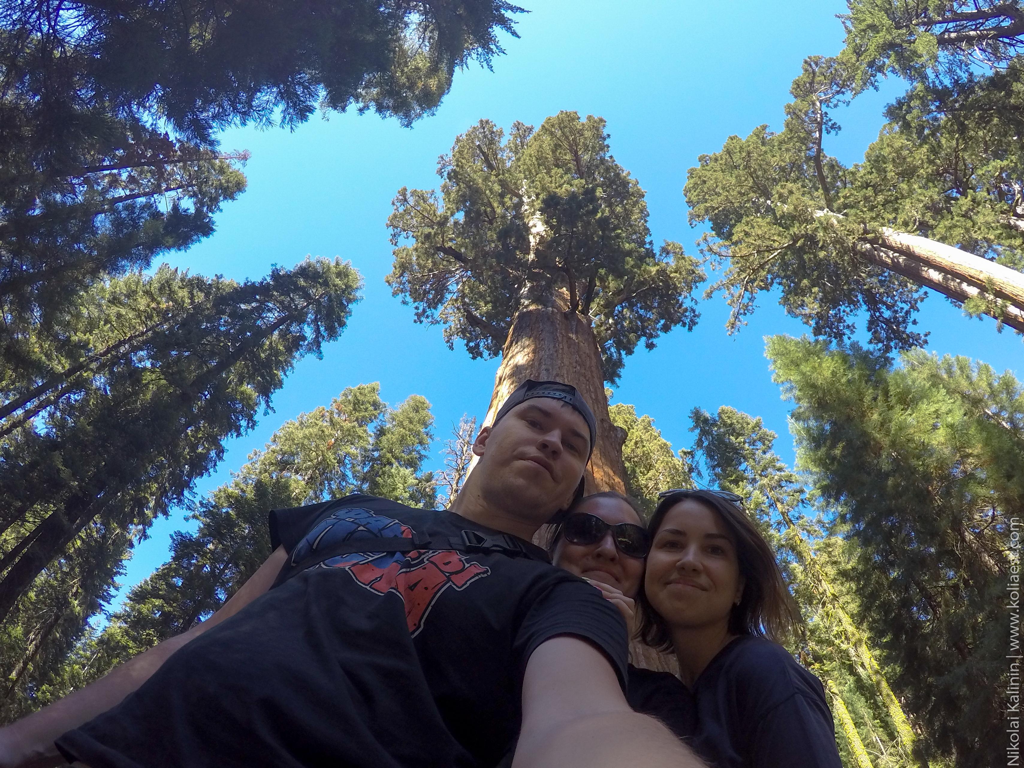 Sequoia-62-2