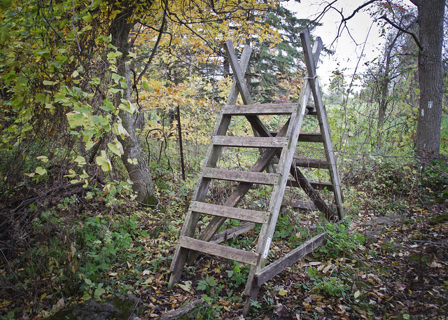 A trail ladder on the Bruce Trail near Hilton Falls