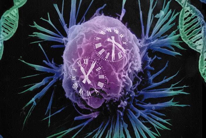Cancer and ageing could be predetermined by the speed of molecular clocks. Image courtesy of the Wellcome Trust Sanger Institute.