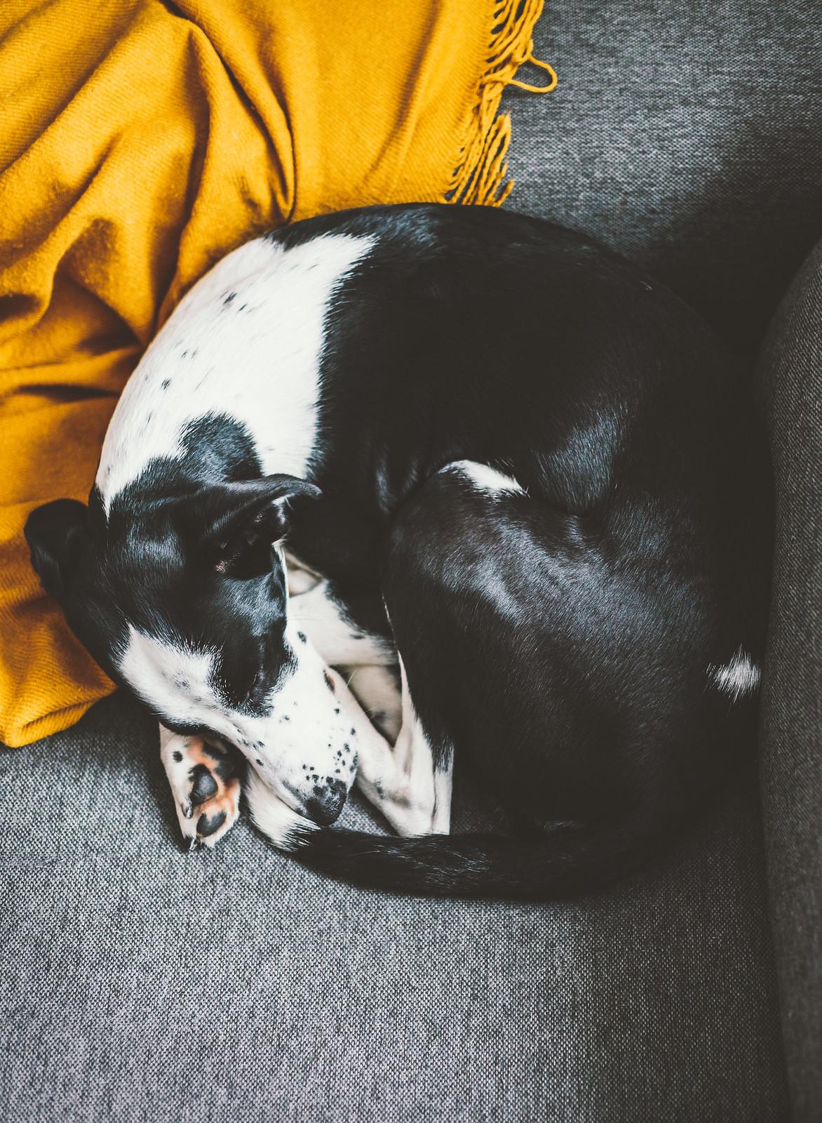 Hunden Elsie - Evelinas Ekologiska