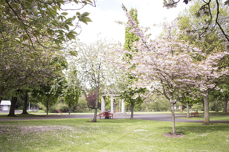 Best Places to see the Cherry Blossom Trees in Dublin