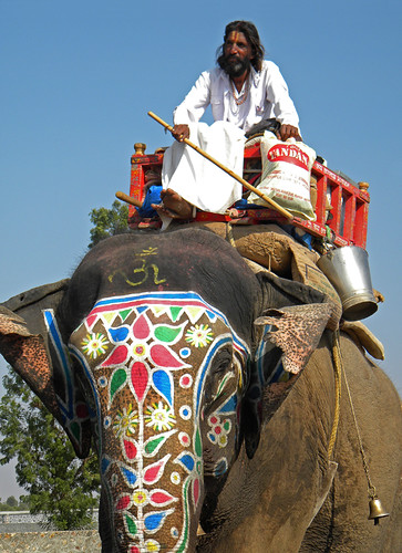 Elephant 'traffic' in India
