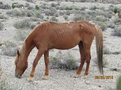 2015-08-26 Cold Creek Horses