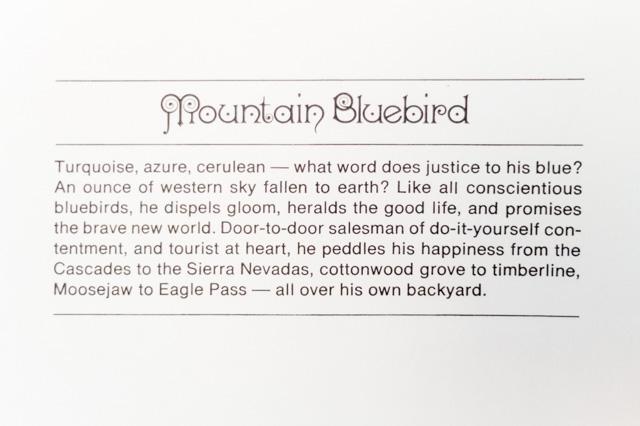 mountain bluebird - birds & words book review