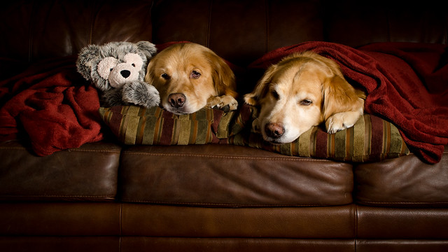 Comfy Dogs