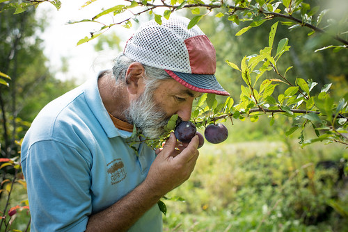 David Smelling Plum at Elmore Roots Nursery | by goingslowly