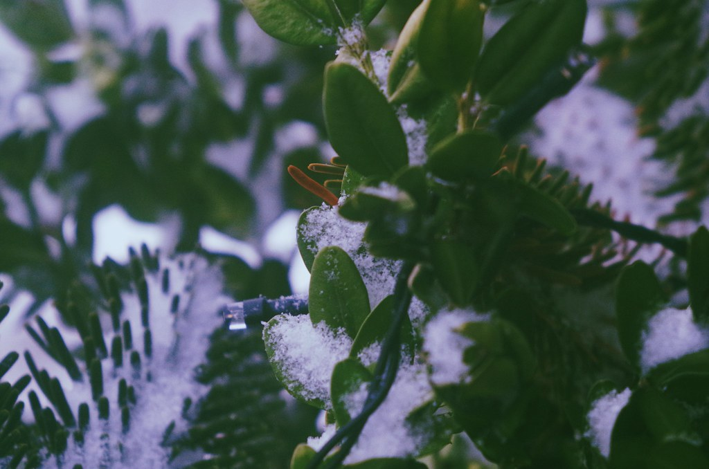 Schneebedeckt -- covered with snow