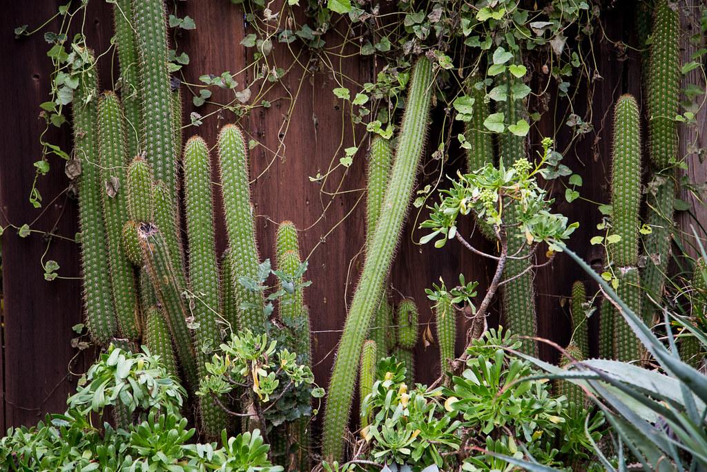 Backyard Cactus Garden | By Akuretz Backyard Cactus Garden | By Akuretz