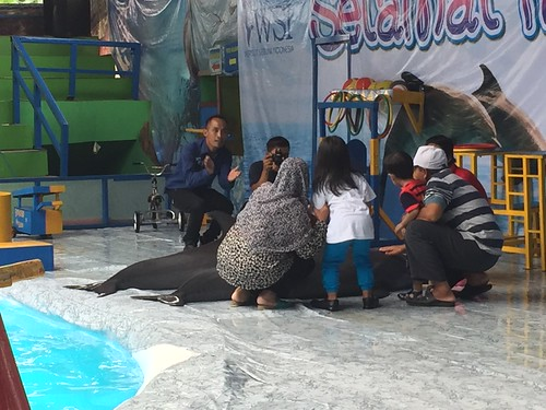 families take photos with dolphin out of water