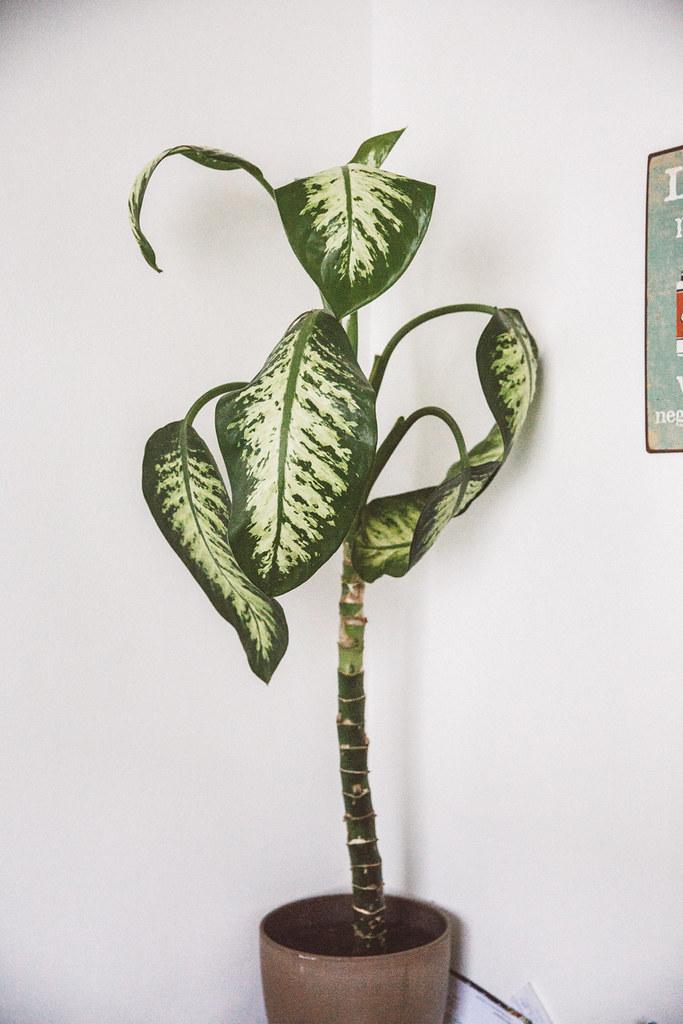 kasvienhoito-10