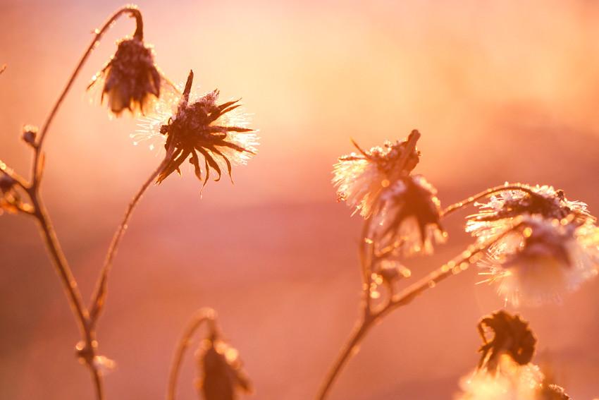 auringonlasku-2488