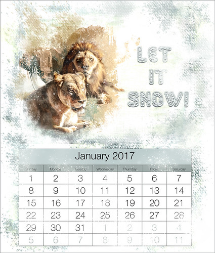 Image of a January 2017 Calendar with Lions showcased