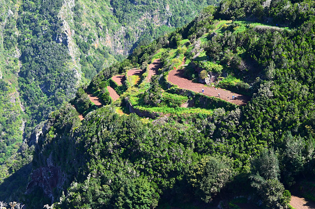 The agricultural terraces, Anaga, Tenerife