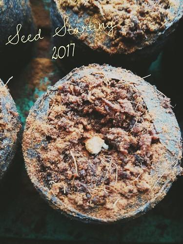Seed Starting 2017