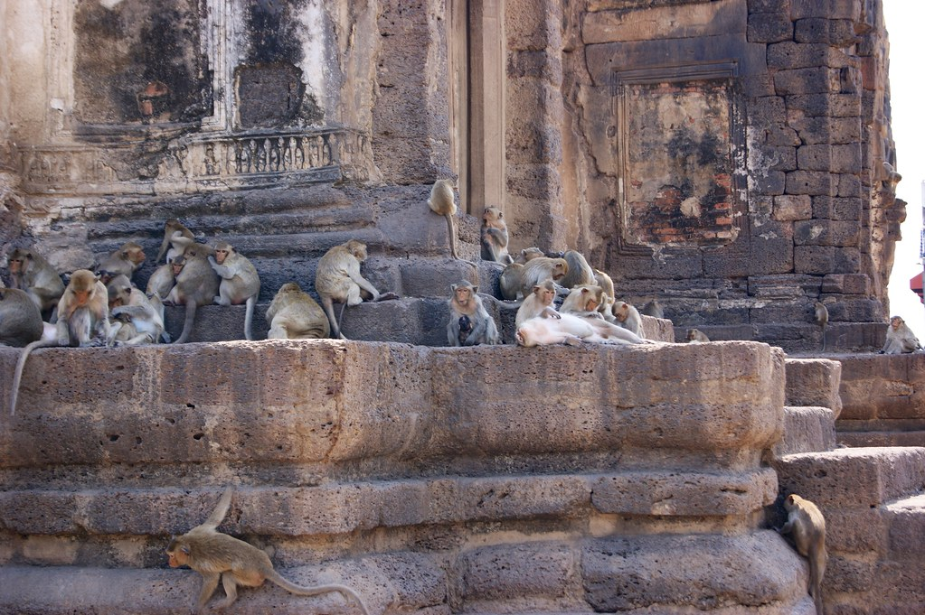 Monkeys chilling in Lop Buri