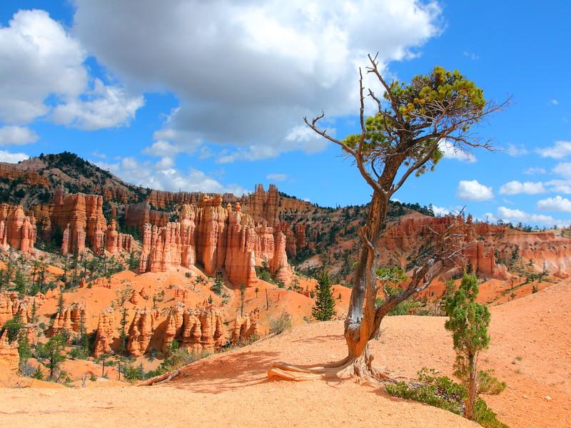 IMG_5521 Fairyland Trail, Bryce Canyon National Park