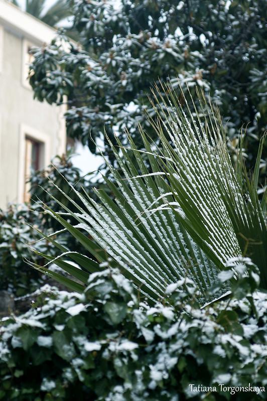 Зелень в снегу