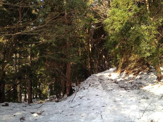 入道ヶ岳 二本松尾根・井戸谷への林道