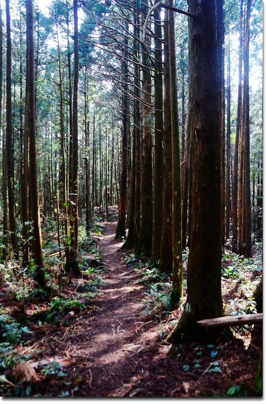 高台山登山步道 7