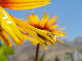 Yellow Daisy and the Droplet | by Hamed Saber