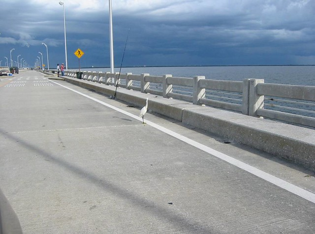 Ibis fishing pier at sunshine skyway st petersburg flor for Sunshine skyway fishing pier