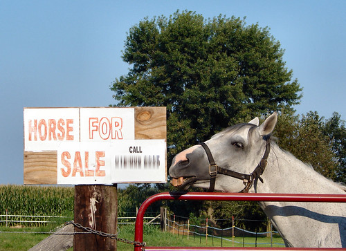 who 39 s for sale star was biting at this sign she doesn 39 t flickr. Black Bedroom Furniture Sets. Home Design Ideas