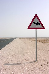 Camel Crossing | by Kireihana