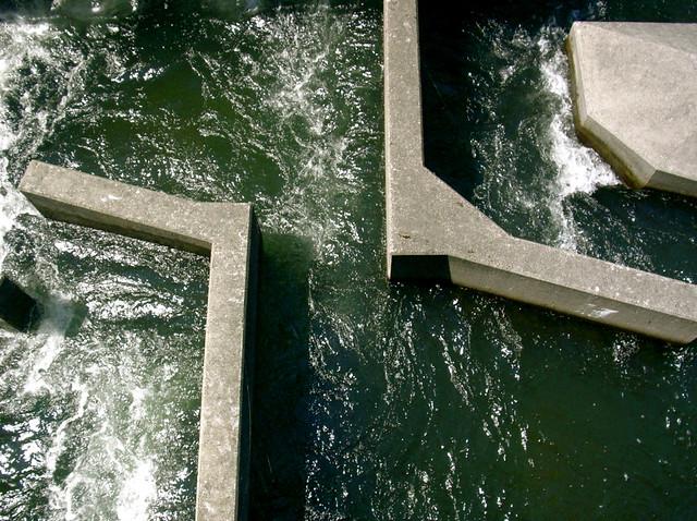 Fish ladder at bonneville dam flickr photo sharing for Bonneville dam fish camera