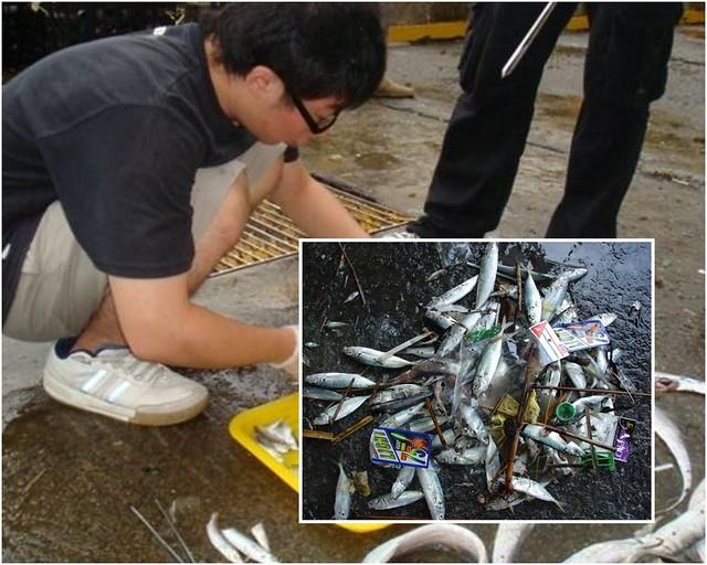 撞擊魚種調查。圖片來源:中研院邵廣昭研究團隊提供;環境資訊中心後製