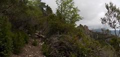Le chemin après la traversée du Valdu Grande : des troncs en travers (Photo Olivier Hespel)