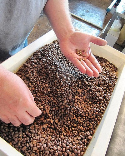 Hand sorting coffee. More Single Origin beans just roasted and ready for you to pick up for your weekend brewing happiness. ☕💕