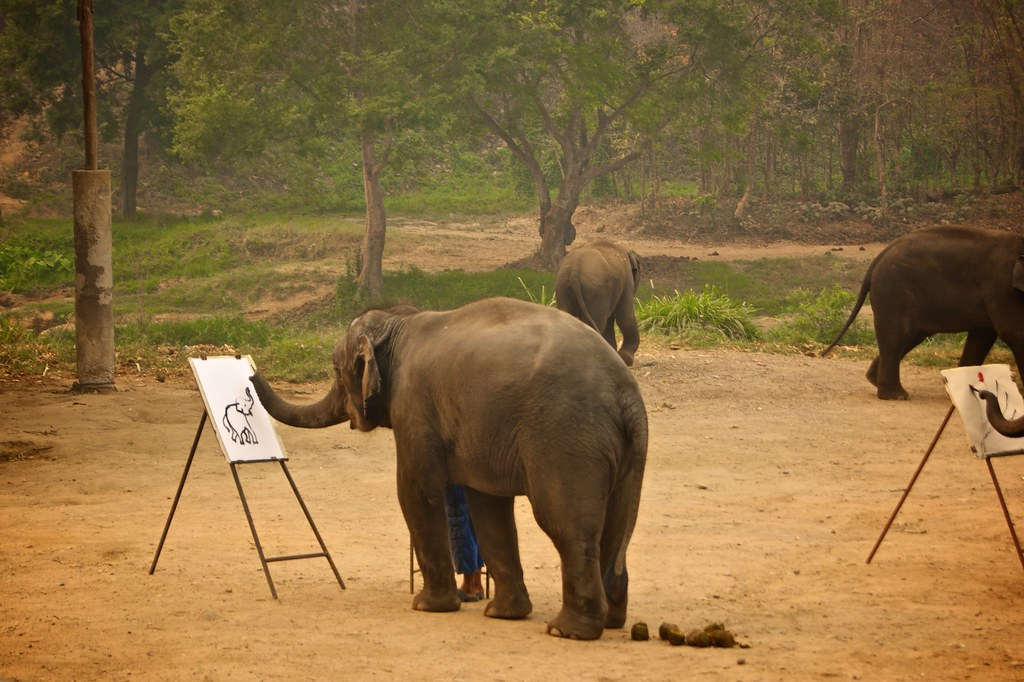 Suda the elephant is drawing
