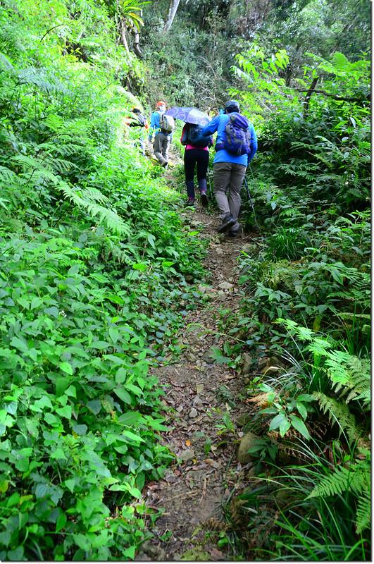 卓武山原始山林小徑 2