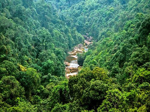 मावफलांग जंगल को खासी आदिवासियों द्वारा सहेजा जाता है