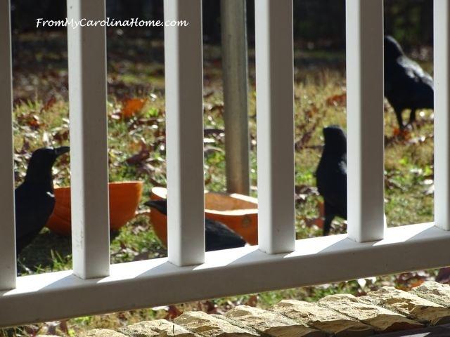 December Crows 2