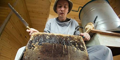 Справжній мед — на пасіці