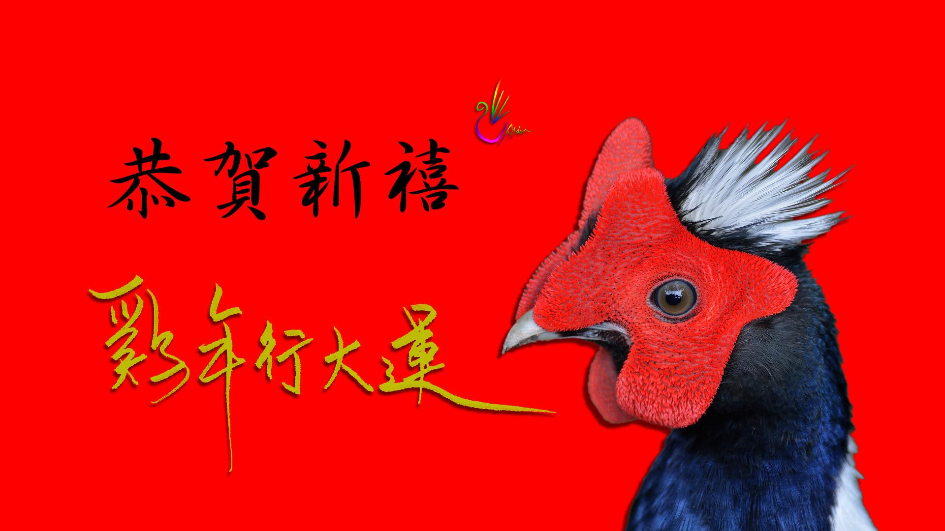 「雞年行大運」的圖片搜尋結果