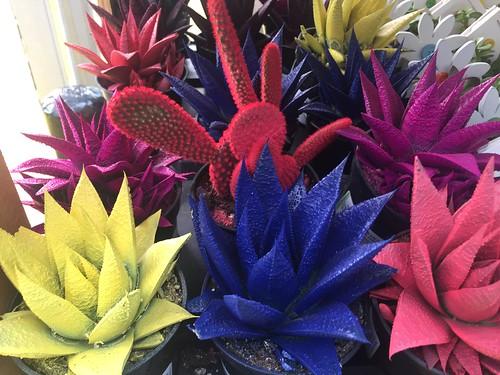 Kosmik Kactus TM Altman Specialty Cactus