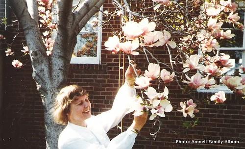 magnolia in East York, Toronto