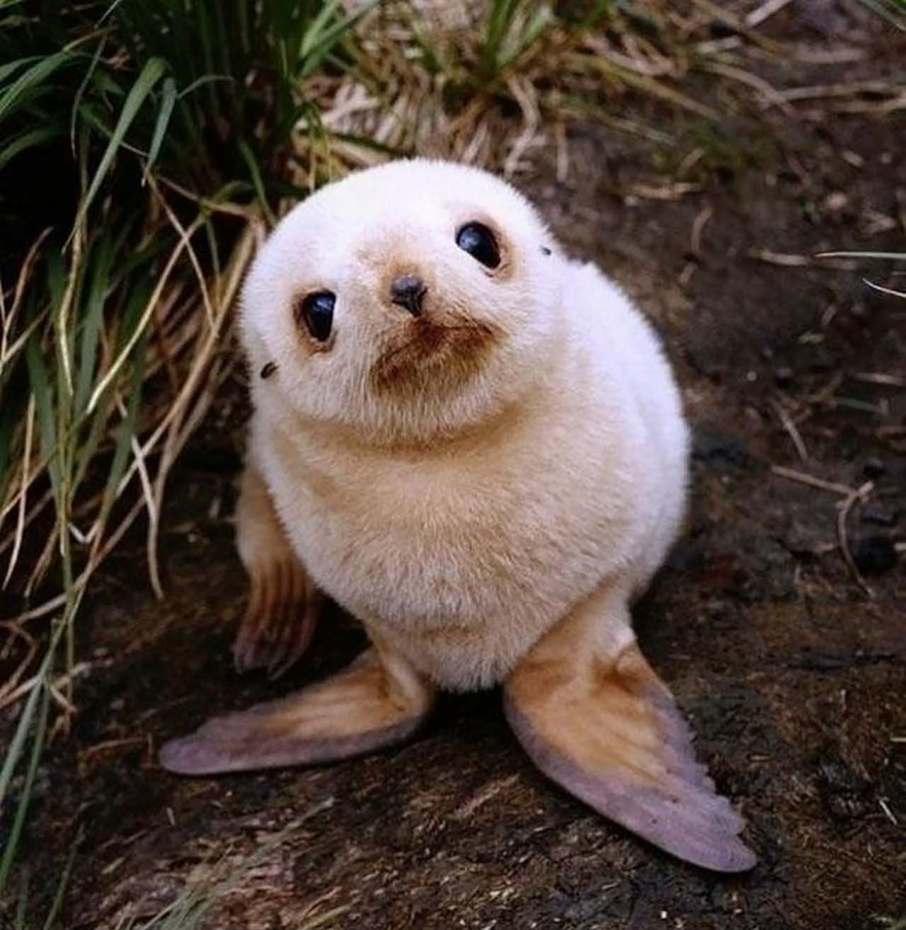 27 Adorable & Tiny Animals That Are Too Cute To Handle #3: Seal
