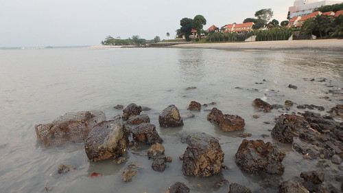 Changi rocky shore after oil spill in Johor Strait, Jan 2017