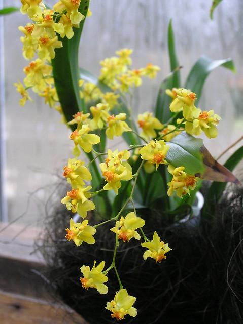 Tallinn BG Orchid Show 2017