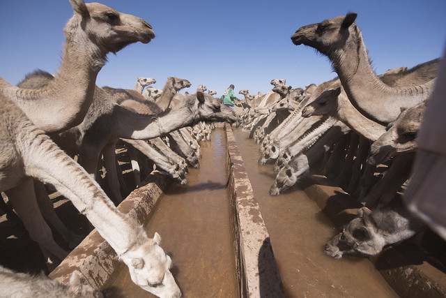 Pastoralists come to Harshim town from neighbouring woredas and Somalia looking for water