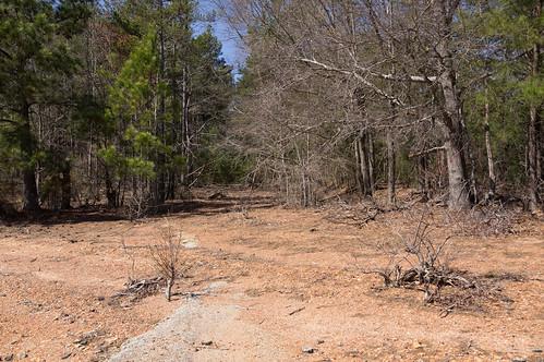 Shaw Island abandoned road - 5