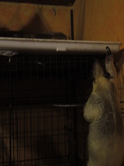 Aurora climbing the cage