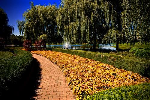 Fall Chicago Botanic Garden Glencoe Il Meridith112
