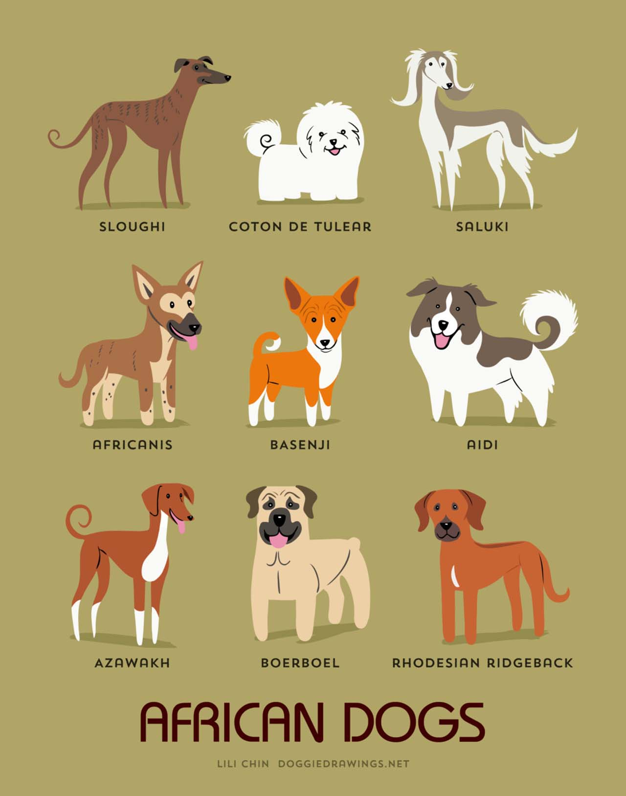 Origin Of Dogs: Cute Illustration By Lili Chin Show Where Dog Breeds Originating From #14: African Dogs