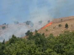 incendio contrada foresta 05