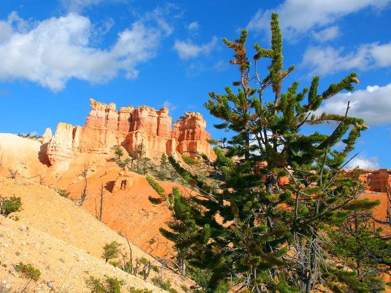 IMG_5253 Bristlecone Pine on Fairyland Trail