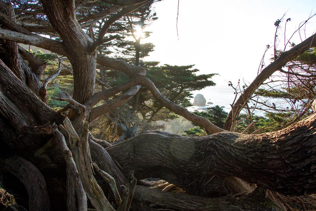 01.14. Lands End, San Francisco